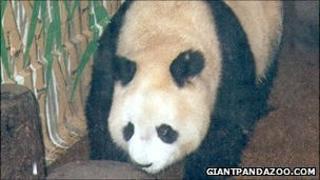 World's oldest panda Ming Ming
