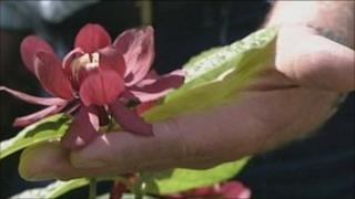 Hillier garden centre flower
