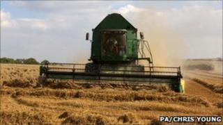 Combine harvester gathering crops, Cambridgeshire