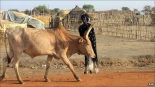 A cow walks along a road in Abyei town, April 2011