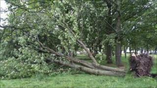 Felled tree at Bannockburn Battle site