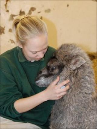 Blackpool zoo keeper with one of their newborn Bactrian Camels