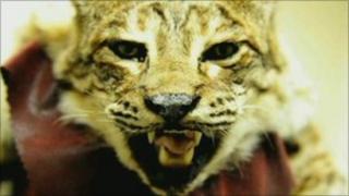 Stuffed animal found in St Helens raid