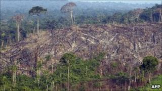 Deforestation of the Amazon (file image)