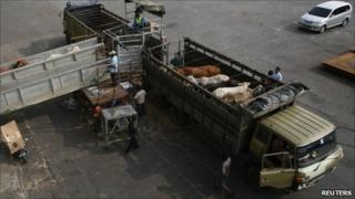 Australian cattle are uploaded at Tanjung Priok port in Jakarta