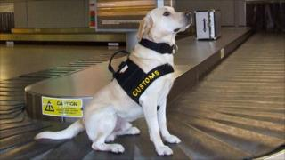 Drug detector dog Barley