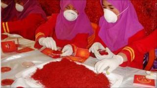 Saffron production in Herat
