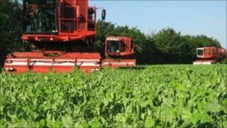 Pea harvest in North Lincolnshire