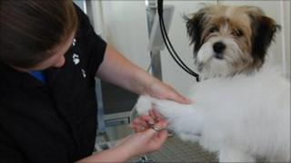 A dog has his nails cut at Otley College