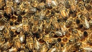 Honey bees (generic)