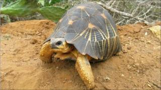 A tortoise in Madagascar