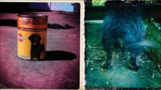 A tin of dog food and a dog from the art exhibition