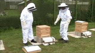 Bees arrive at Lincoln Prison