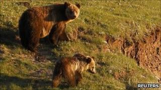 File pic of a grizzly bear and her cub in the Hayden Valley in Yellowstone National Park, Wyoming, 24 June 2011