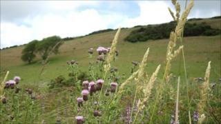 Llangloffan Fen wetland nature reserve near Castlemorris