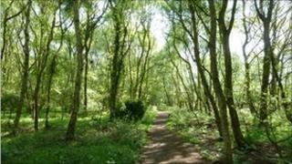 Path through woodland on Flitwick Moor
