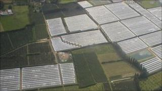 Polytunnels in Kent - generic