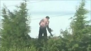 David Price Snr cutting trees