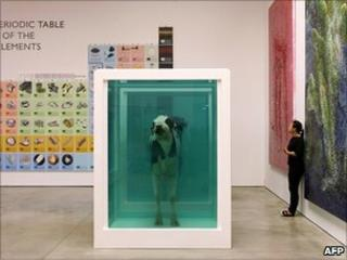 """A piece by British artist Damien Hirst entitled """"Love""""s Paradox"""", cows in a formaldehyde solution, at the White Cube Gallery in London, 01 June 2007"""
