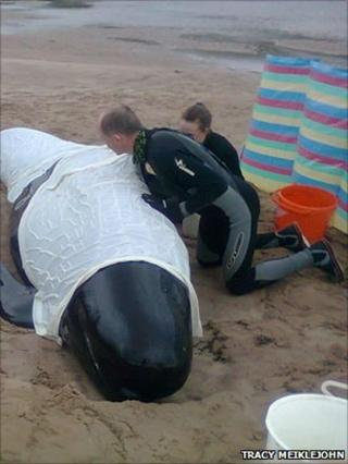 Whale rescuers