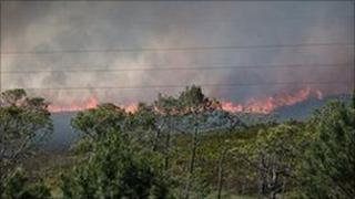 Heath land fire at Upton Heath, Dorset - June 2011