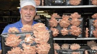 Grower John Dorrian with pink mushrooms