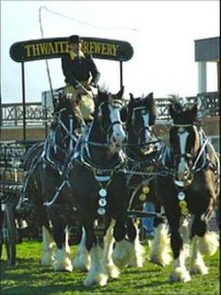 Thwaites Shire dray horses