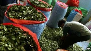 A man fills bags with coca leaves at the coca market in La Paz, Colombia