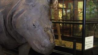 Stuffed rhino minus its horn