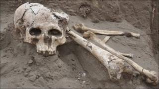 Skeleton generic