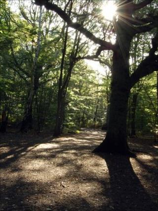 Woodland (Image: BBC)