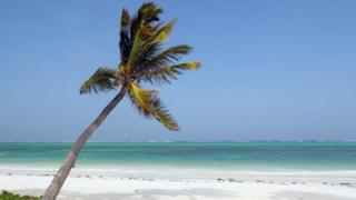 A palm tree on a beach