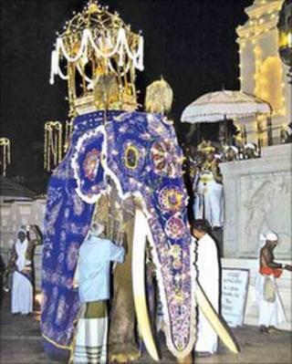 File photo of Millangoda Raja at the Kandy festival