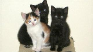 Kittens (left to right): Bassey, Shirley and Novello