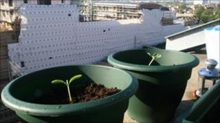 Pot plants on a balcony (generic)
