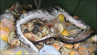 The dead python found in the waste food bin