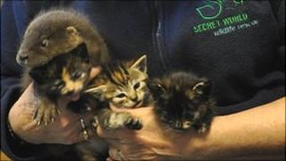 Kittens with baby otter cub, Secret World