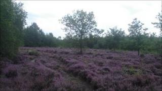 Bucklebury Common