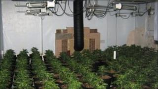 About 1,000 plants were found at a property in Morecambe
