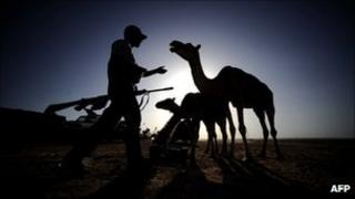 A Libyan rebel walks towards a camel at an advanced position near Al-Sadaadi on the road between Misrata and Sirte on August 31, 2011