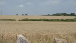 Fields where Elephant Eden will be built