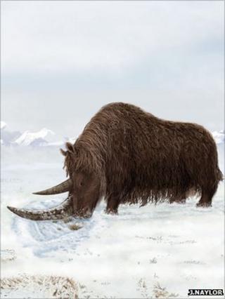 Woolly rhino impression (Julie Naylor)