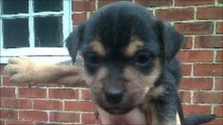 The puppy which had been left behind