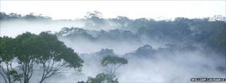 Dawn over amazon rainforest