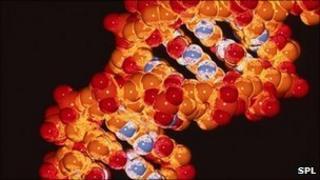 strwythyr DNA