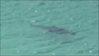 Shark seen in amateur footage of the beach