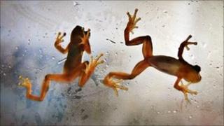 Frogs. Photo: Sally Bennett
