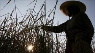 A Thai farmer works in a rice field in Yala province, southern Thailand