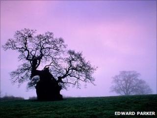 Stilton Oak