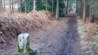 'Roman Road' on Sandford Heath